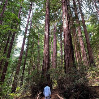 Amongst the giants  . , . . . . . . . , . . . . . . . . . . . #outdoors #nature #explore #photo #travel #travelphotography #igers #travelgram #travelblogger #igdaily #instatravel #redwoods #wanderlust #california #sanfrancisco #westcoast #photography #photooftheday #dope #picoftheday #trees #tweegram #bestoftheday #instadaily #me #instacool #igtravel #amazing #adventure